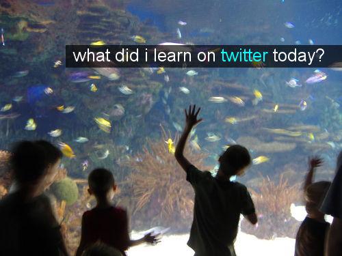 twitter-school