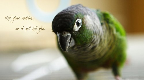pita the bird