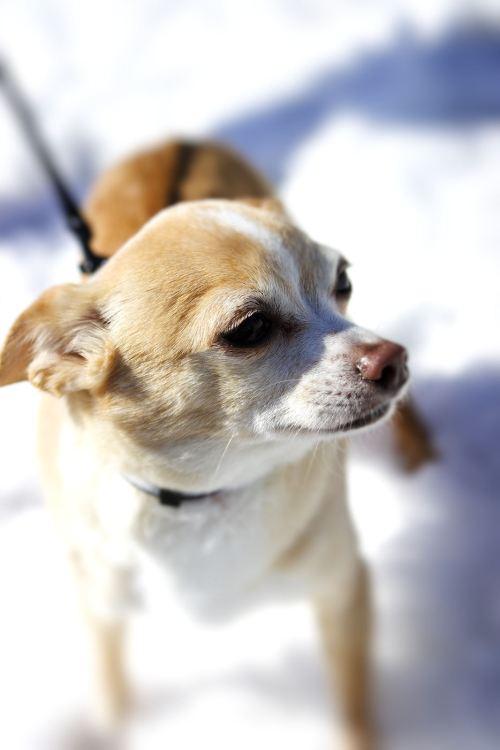 snowdog again