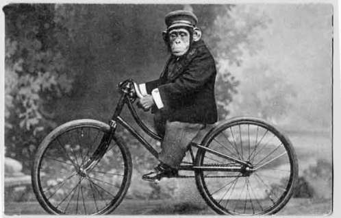 SOCIALMEDIA NETWORK bikes