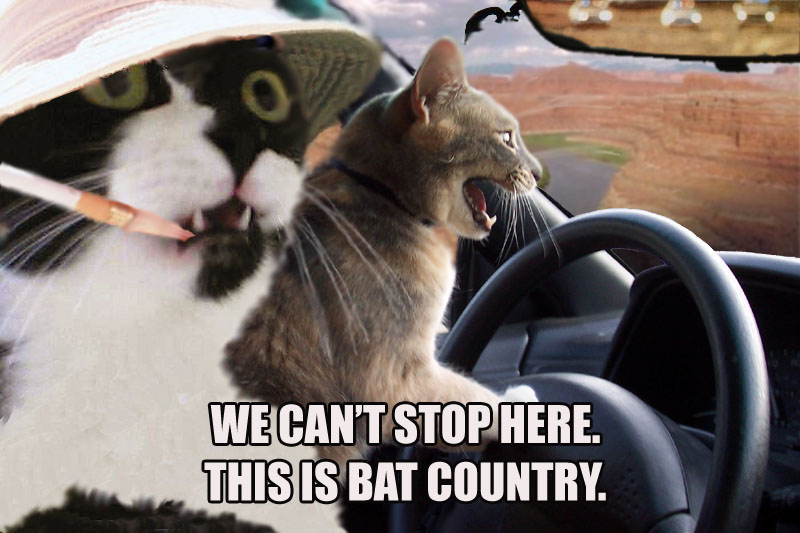 Funny Cat Picture Thread! Cats_bat_country